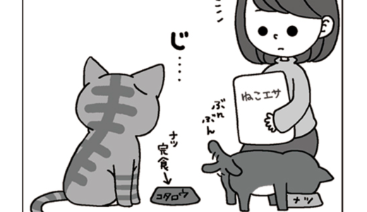 箱入り猫、小太郎2